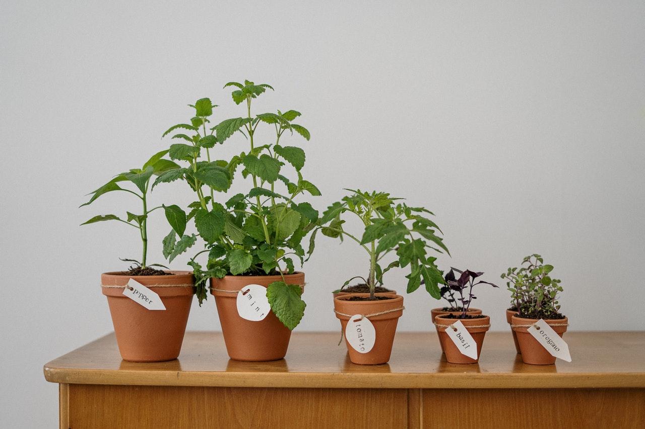 6 tips för att låta dina växter överleva semestern